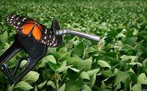 KSB Pumpen & Armaturen für Biokraftstoffe