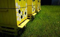 Pszczoły zamieszkały już w naszej pasiece